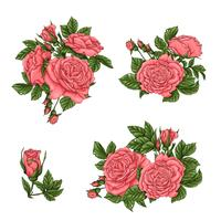 Set di rose di corallo. Illustrazione vettoriale