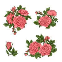 Conjunto de rosas corais. Mão, desenho, vetorial, ilustração