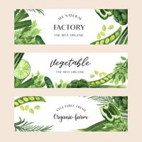 Green vegetables watercolor Organic farm fresh for food menu , aquarelle  banner card design vector illustration.