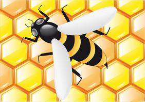 bee on honeycombs vector