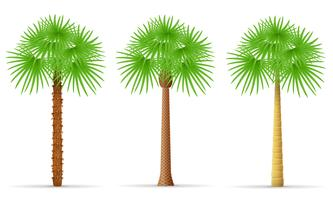 palm tree vector illustration