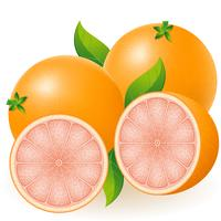 grapefruit vectorillustratie