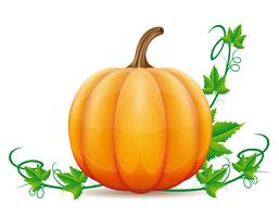 pumpkin and leaf vector illustration