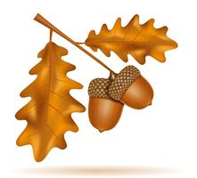 autumn oak acorns with leaves vector illustration