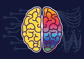 Vector de hemisferios de cerebro humano
