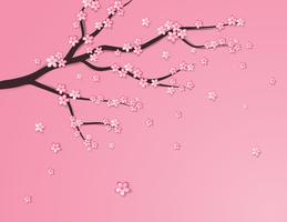 Plum flower or cherry blossom on pink background.