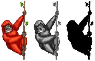 Set of orangutan character