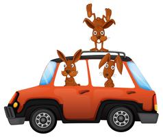 Lapin dans la voiture