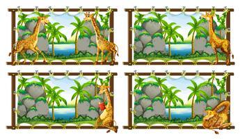 Cuatro escenas de jirafa junto al lago.