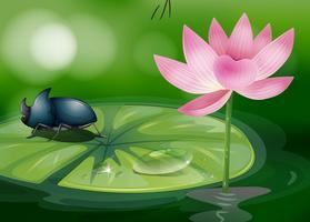 Ein Käfer über der Seerose