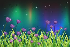Violette Blumen im Garten