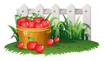 Cesta de maçãs no jardim