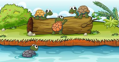 Turtles on a dry wood