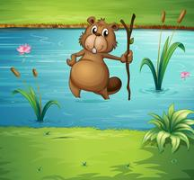 A beaver with a wood in the river