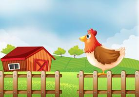A hen at the field with a barnhouse