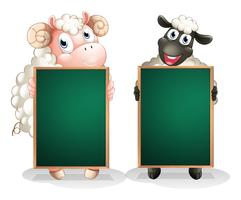 A black and a white sheep with empty blackboards