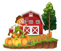 Agricoltore che lavora sul giardino di zucca