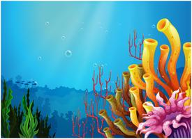 Corals under the sea