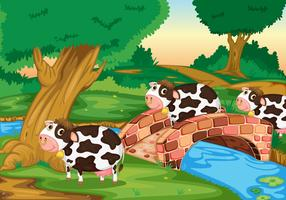 3 vaches
