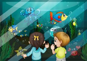 En el acuario