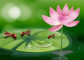 The three ants above the waterlily plant