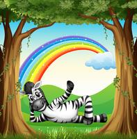 A zebra at the forest with a rainbow