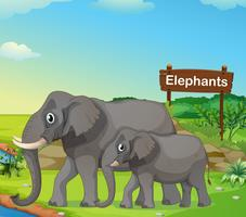 A small and big elephant with a signboard