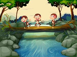 Three monkeys crossing the river