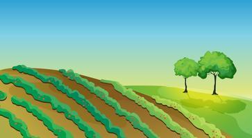 Tierras agrícolas y arboles.