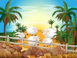 Mouton et ferme