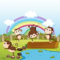Macacos e um arco-íris