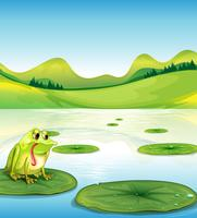 A hungry frog above the waterlily