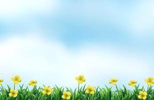 Campo de flores