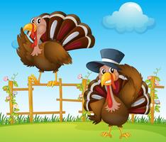 A turkey above the wooden fence and a turkey wearing a hat