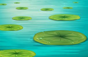 Escena del estanque tranquilo