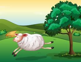 Uma ovelha