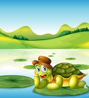 Uma tartaruga feliz acima do flutuante nenúfar
