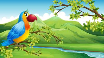 A colorful bird near the mountain