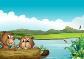 Two beavers vector