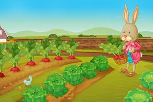 Rabbit  picking vegies