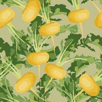 Vegetable turnip seamless pattern. Healthy food background.