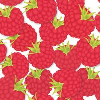 Berry pattern. raspberry seamless background. Food ingredients