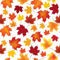 Autumn maple leaves seamless pattern Floral background