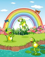 Three playful frogs at the pond and a rainbow in the sky