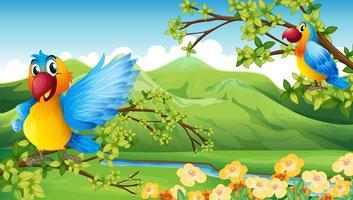 Birds and a mountain