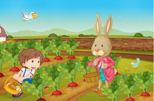 Coelho colhendo legumes