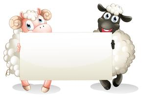 Two sheeps holding an empty banner