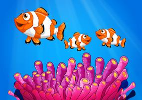 Clownfishes onder de zee