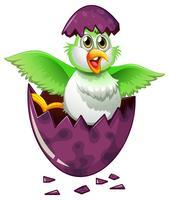 Pájaro verde en huevo morado