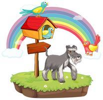 Hund och fågelhus